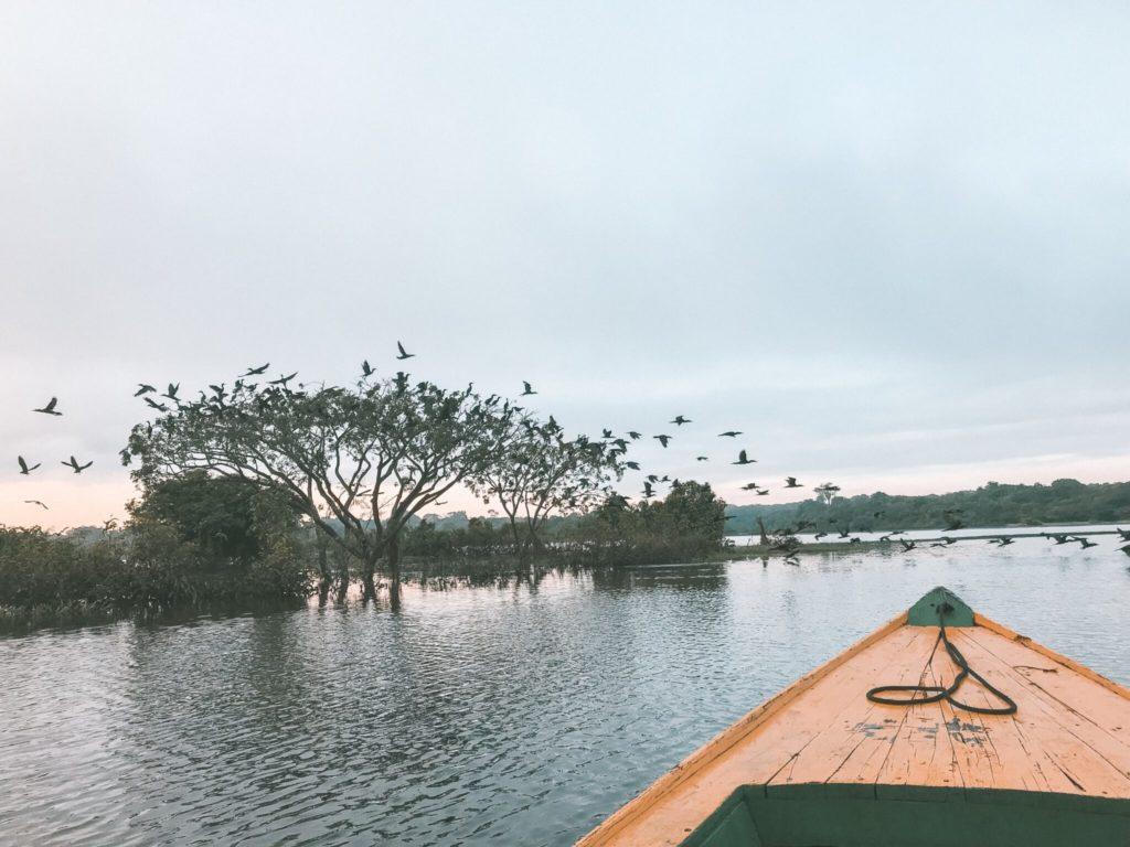 O que fazer na Floresta Amazônica - A escolha do roteiro