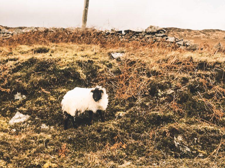 O que fazer em Galway – Roteiro de 3 dias (dia 3)